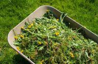 Sfalci e raccolta verde mantova ambiente