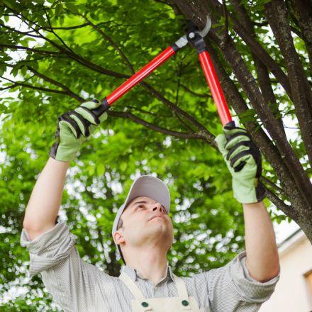 Operatore ecologico mantova ambiente pota alberi