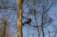 giornata dell\'albero 2005_6.jpg